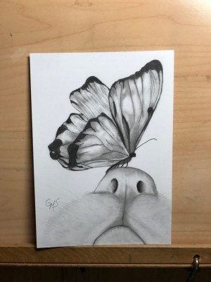 beginners draw easy simple butterfly