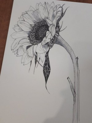 pencil drawings easy flowers drawing sketches sunflower inspiration flower sketch pen sanderson victoria ink rose tattoo petals colors