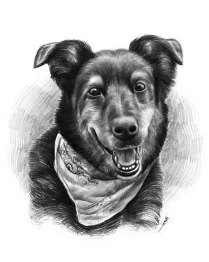 pencil sketch easy sketches draw portraits cartoons source dog