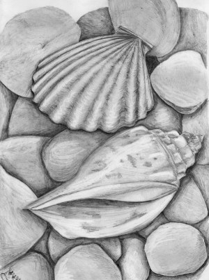 pencil drawing sketches easy draw shell still drawings sketch shells observational simple sea painting shading seashells pencils skizzieren fashionhombre ocean