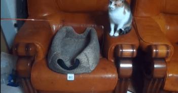 ネコがネコを釣る動画