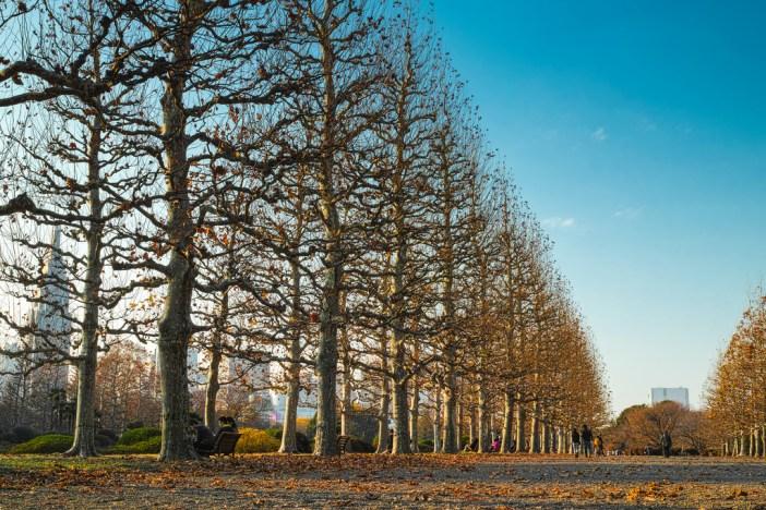 新宿御苑の木々