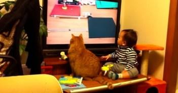 ピタゴラスイッチに同調する男の子とネコ
