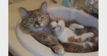 洗面所を満喫するネコ