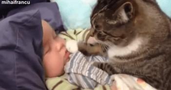 赤ちゃんが大好きなペットたち