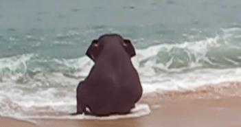 水遊びする子ゾウ