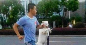 セグウェイで散歩する犬