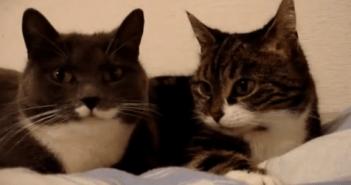 ネコが何かを相談している
