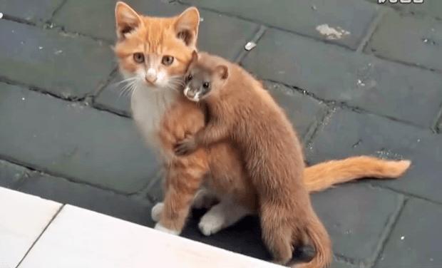 ネコが大好きなイタチ