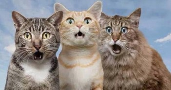 全猫が驚いた