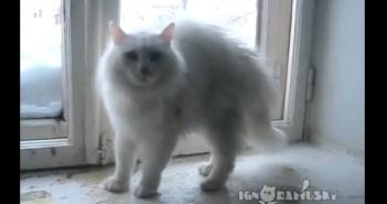 しゃべるネコ