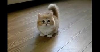 猫じゃらしの動きに付いて行けていないモフモフの子猫