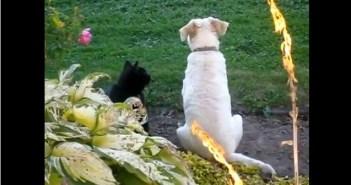 ワンコとネコ