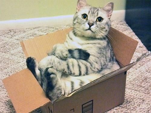 sitting-cat3