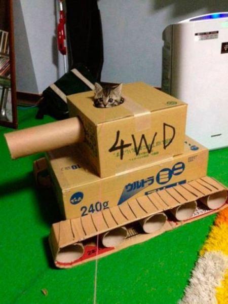 戦うネコ (3)