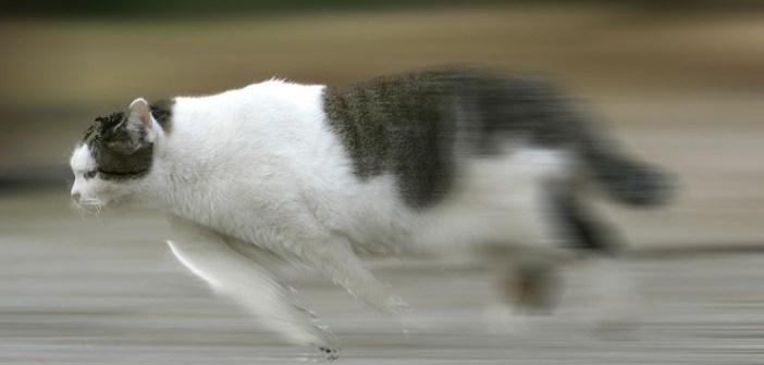 走り回るネコにカーレースの効果音を付けたらこうなった