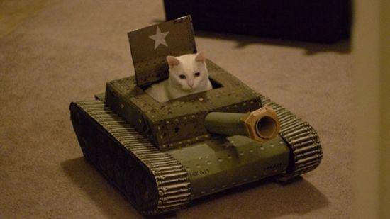 戦うネコ (8)