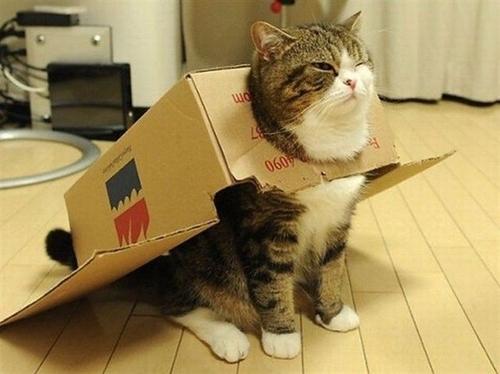 戦うネコ (1)