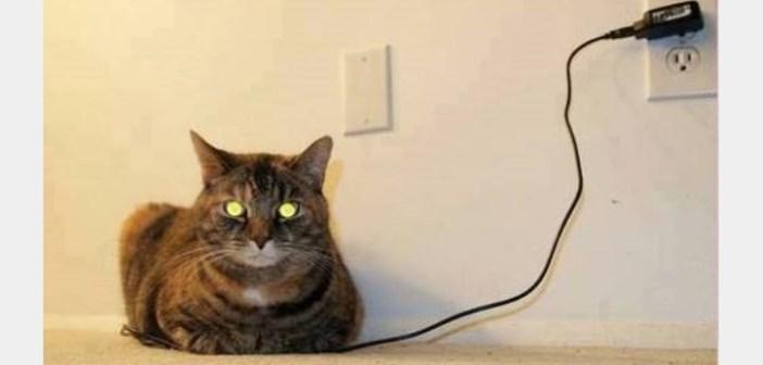 充電中の猫