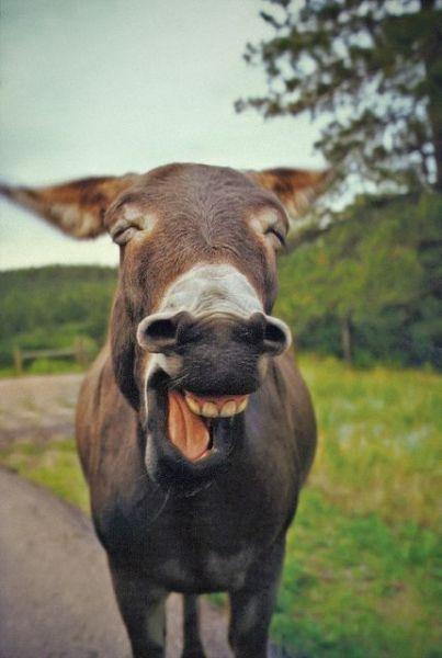 動物の大笑い (11)