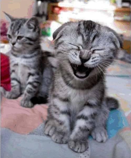動物の大笑い (3)