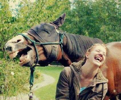 動物の大笑い (32)