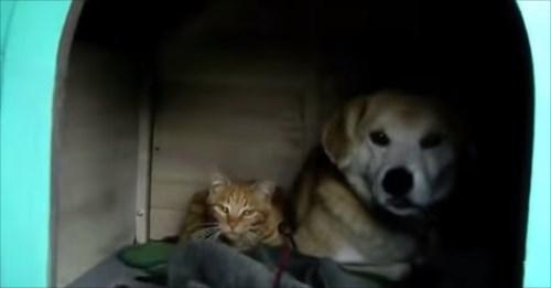 犬小屋に住み着いた野良猫_R