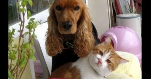 家族になった猫