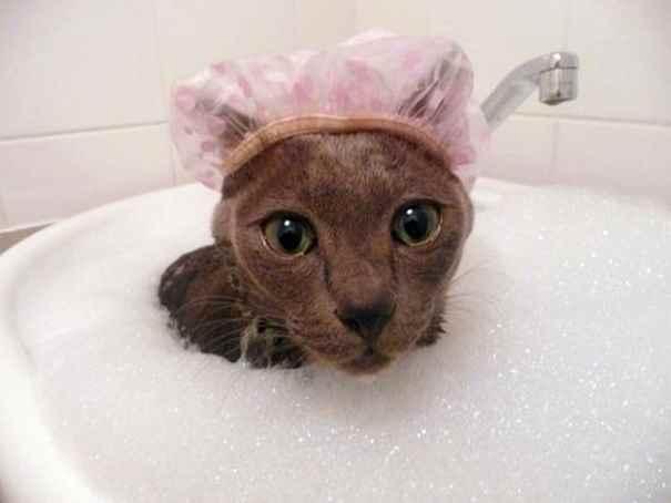 cat-loves-water-bath-6__605_R