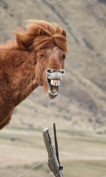 動物の大笑い (8)_R