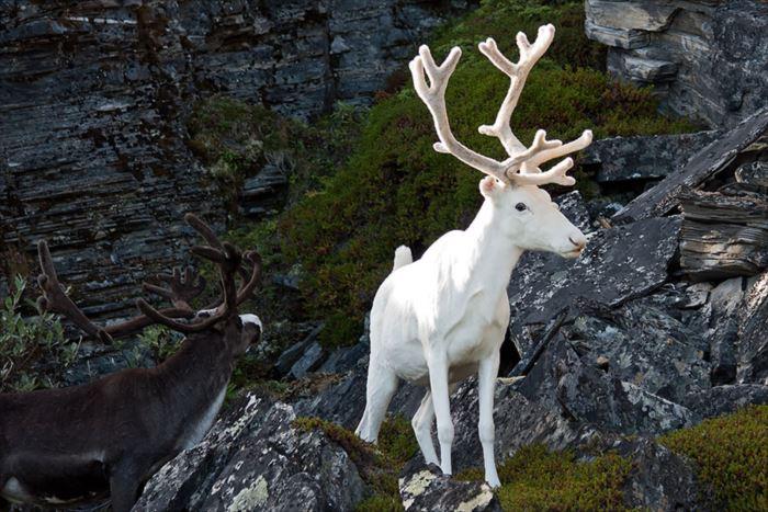 albino-animals-3-15__880_R