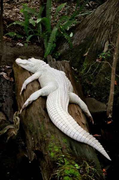 albino-animals-3-16__880_R_R