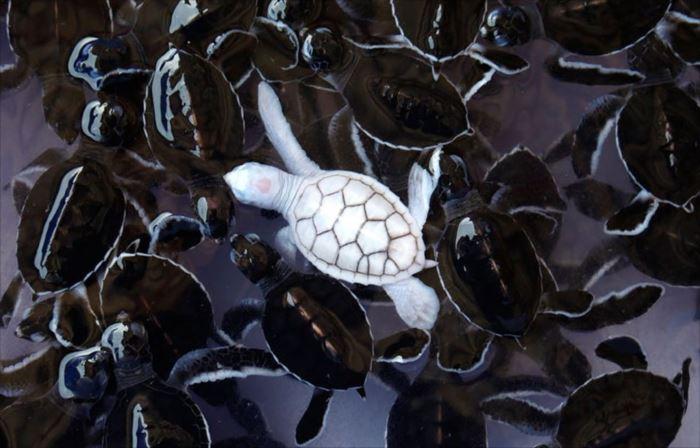 albino-animals-3-2__880_R