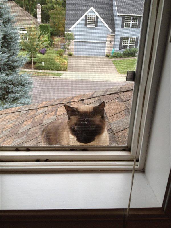 cat10_R