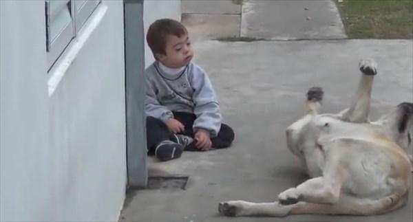 dog4_R