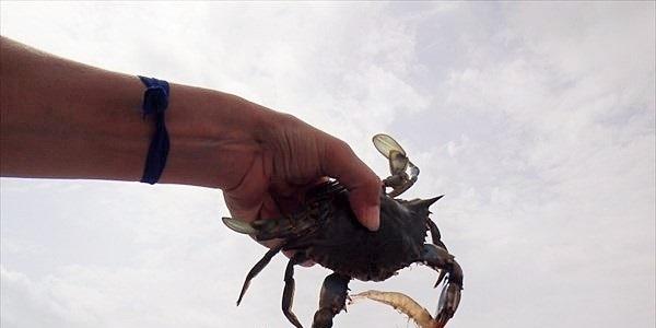 crab_R
