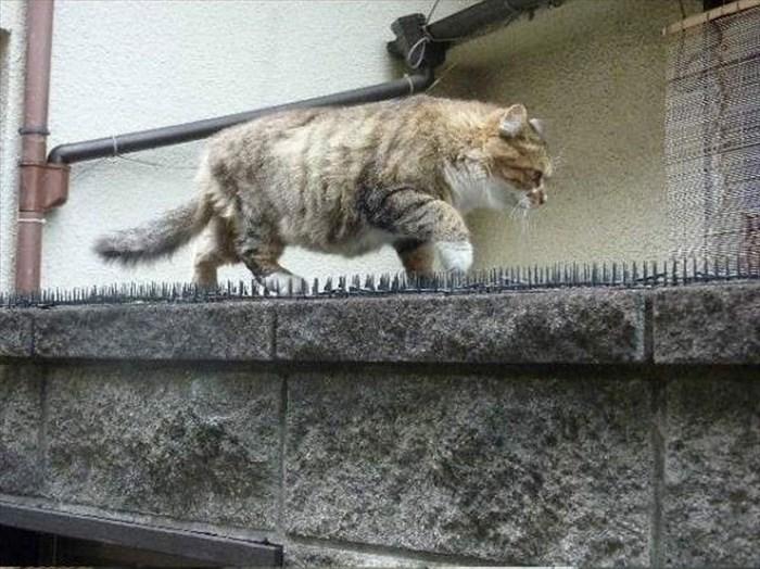social-cat-4_R