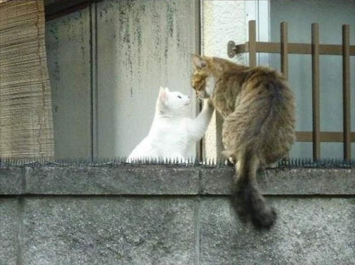 social-cat-5_R