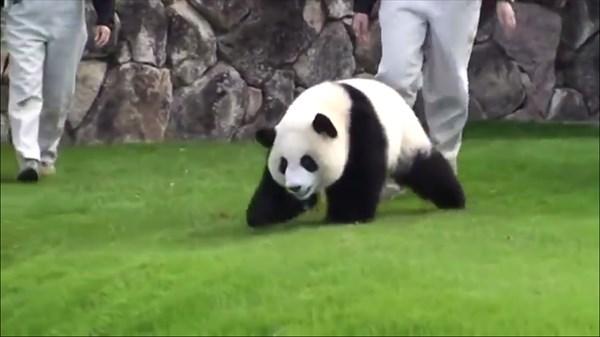 panda4_R