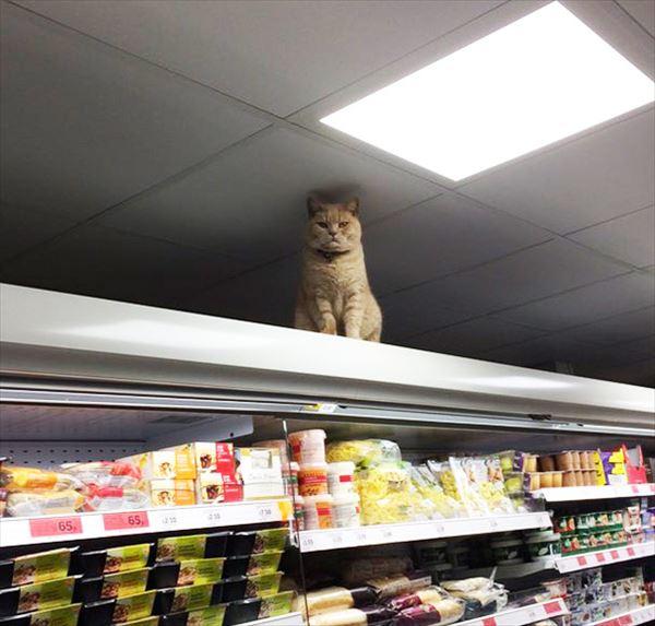 supermarket-sainsburys-cat-olly-oliver-brockley-london-15_R