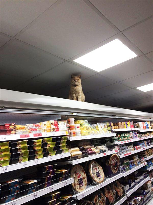 supermarket-sainsburys-cat-olly-oliver-brockley-london-4_R