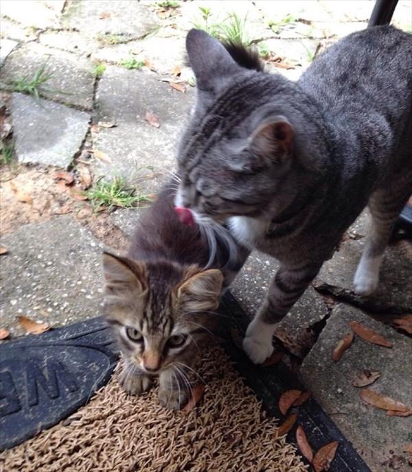 kitty (2)_R