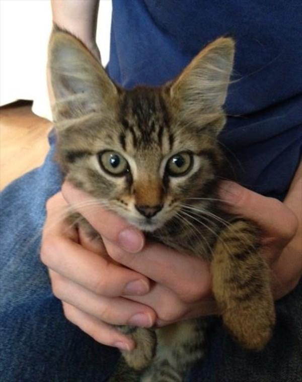 kitty (5)_R