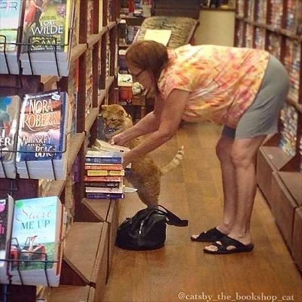 bookstore (9)_R
