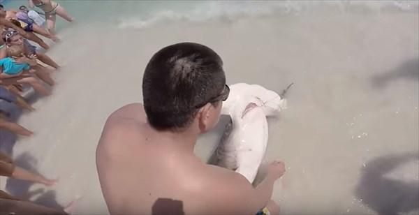 poor-shark_r
