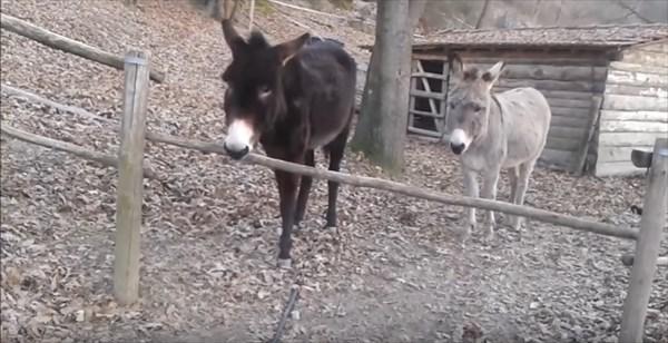 donkey_6_r