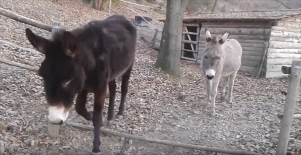 donkey_7_r