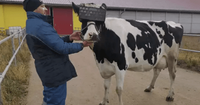 VR googles for Cows