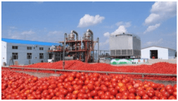 Image result for Dangote tomato factory resumes production February