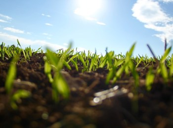 Zero-Budget Natural Farming